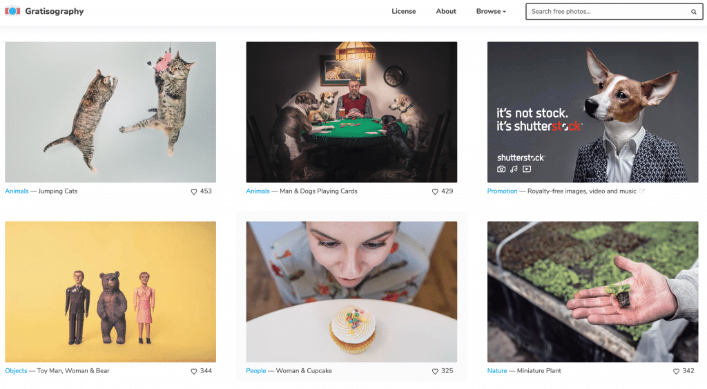Banque-images-gratuites-gratisographie